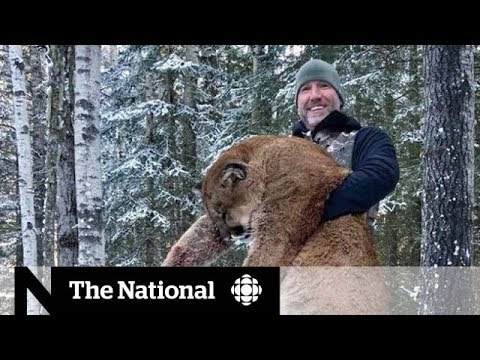 Canadian tv personality sparks outrage for hunting cougar in alberta and posing with dead carcass