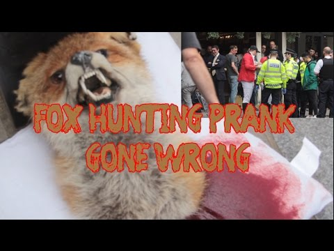 Fox hunting prank gone wrong as usual