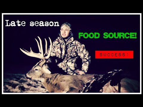 Deer hunting - bow hunting late season illinois whitetails