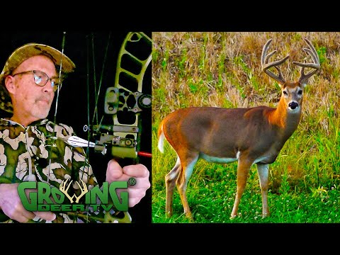 Deer hunters: hunt these food sources in the early season (651)