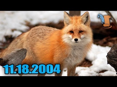 Today in history: fox hunting banned in uk