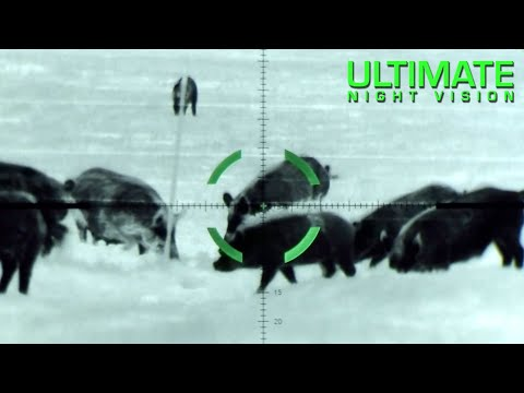 Texas hunter eliminates hundreds of feral hogs with military-grade sniper scope