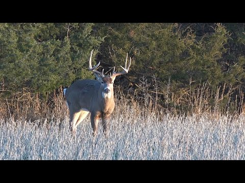 """Illinois deer hunting: """"spook"""" - the management advantage"""