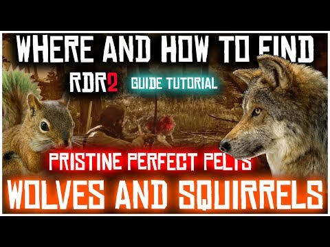 How to find pristine squirrels and wolves and get perfect pelts | red dead redemption 2 | location