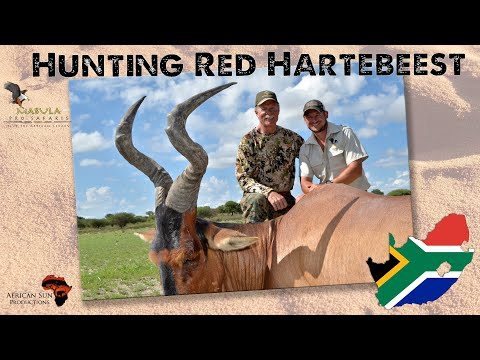Hunting red hartebeest in south africa - one of the most iconic and underrated species in africa