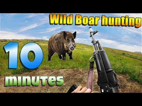 10 minutes // the best // professional hunting for wild boar // from the first person