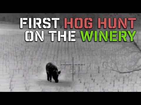 First feral hog hunt at a texas winery