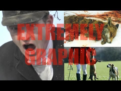 The truth about fox hunters // extremely graphic