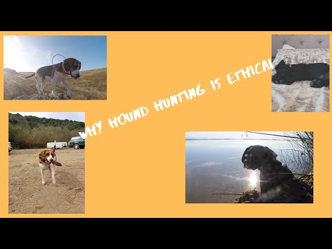 Why hound hunting is ethical