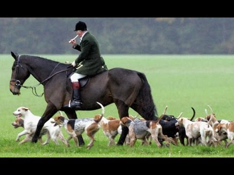 Fox hunters abusing horses - wrong way to get across water - pretty helmets