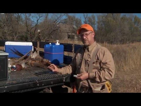 Chokes and shells for pheasants -- safe shooting & hunting tips with dave miller