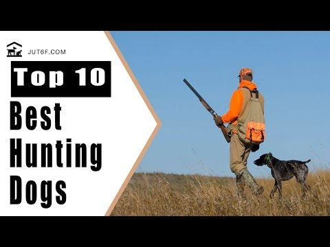 Hunting dog breeds - top 10 best hunting dogs in the world