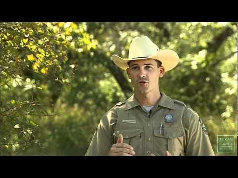 How to avoid violating texas hunting laws