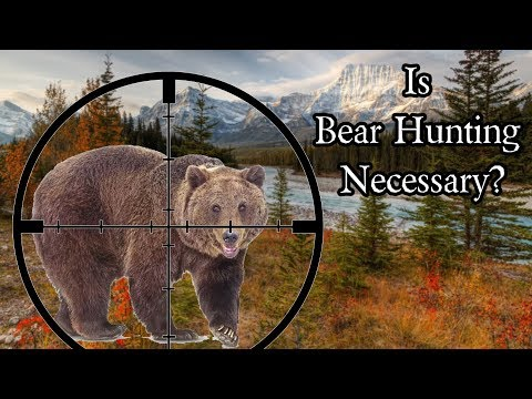 Is bear hunting necessary and ethical?